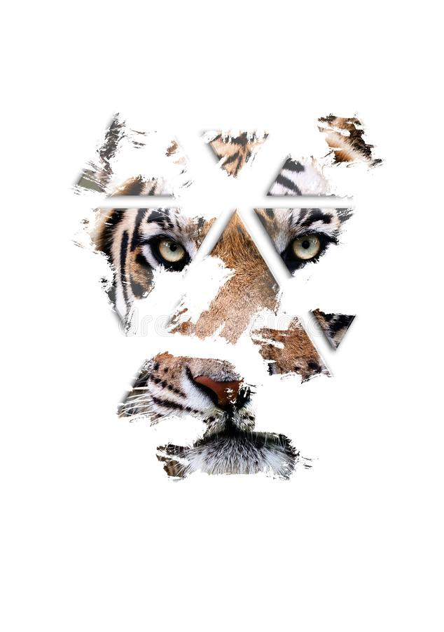 O tigre está olhando-o, belas artes fotos de stock