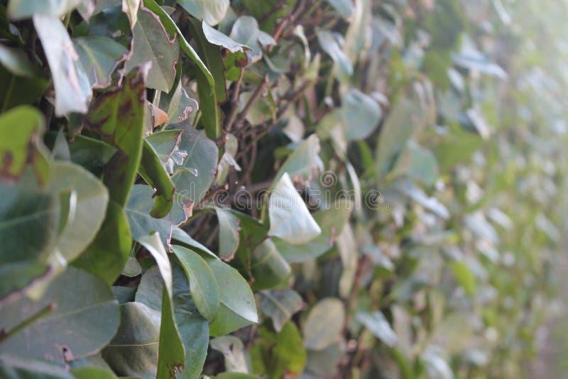 O tijolo e a erva frescos da parede da grama verde da mola cercam o fundo foto de stock royalty free
