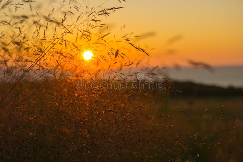 O tiro do sol de ajuste através da grama de prado fotografia de stock