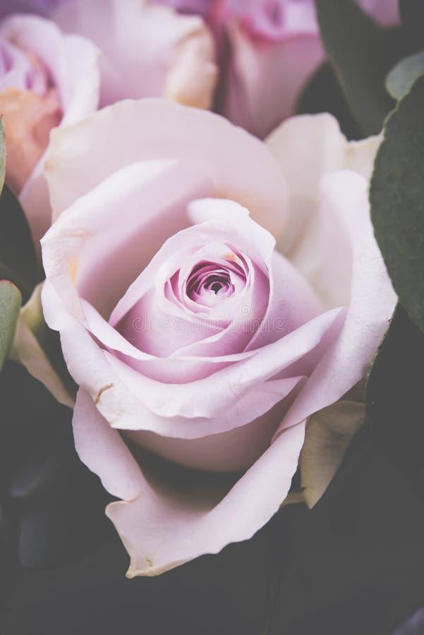 O tiro macro das rosas cor-de-rosa frescas, verão floresce, estilo do vintage imagens de stock royalty free
