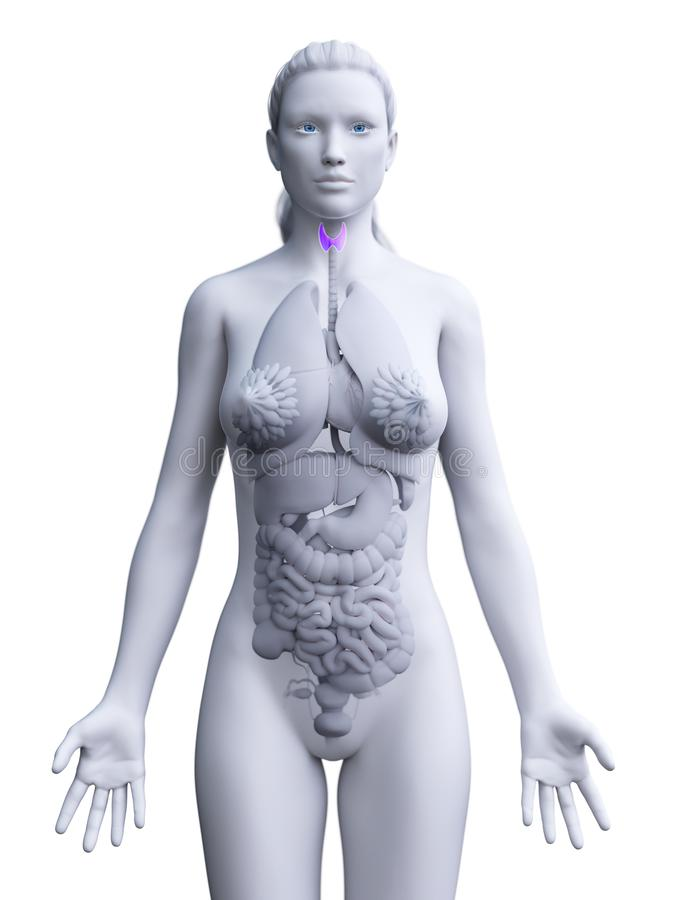 O tiroide de uma mulher ilustração do vetor