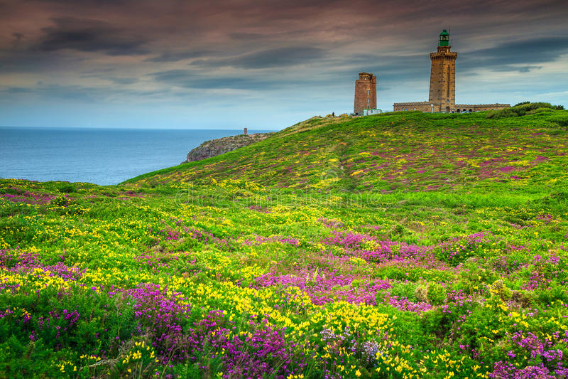 O tojo amarelo e a urze violeta florescem, tampão Frehel, França fotografia de stock