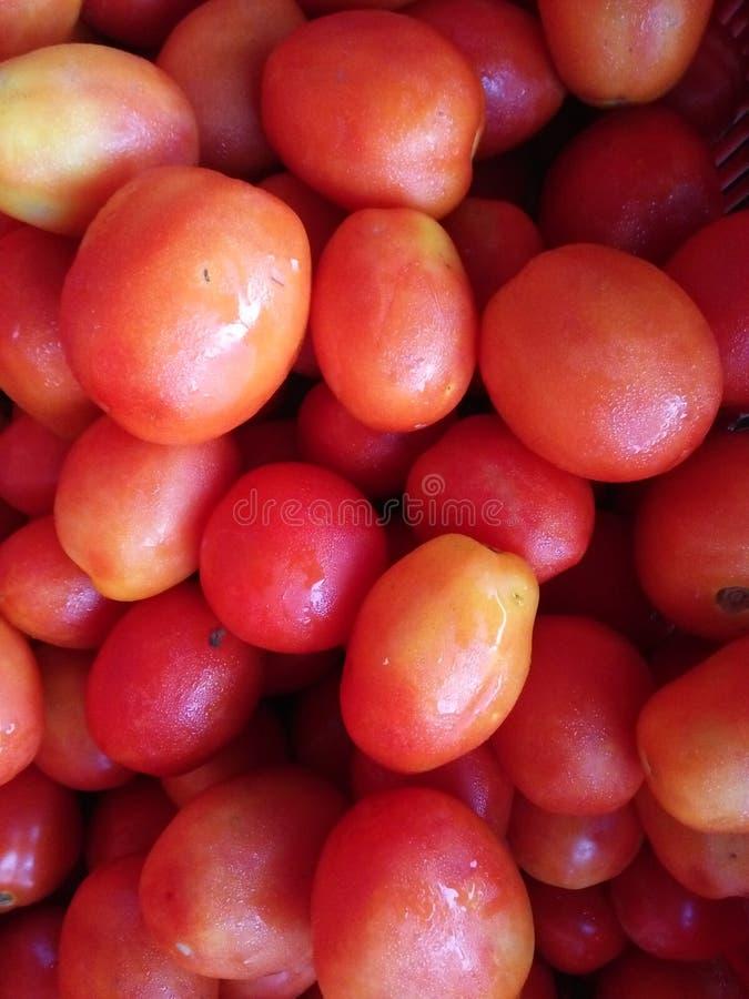O tomate é muito interesse toda vegetal fotografia de stock