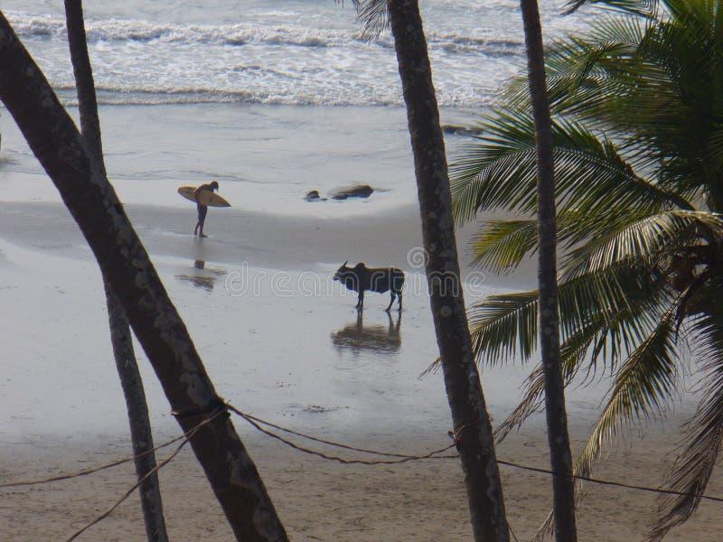 O toque com natureza selvagem palmeiras e Sandy Beach foto de stock royalty free
