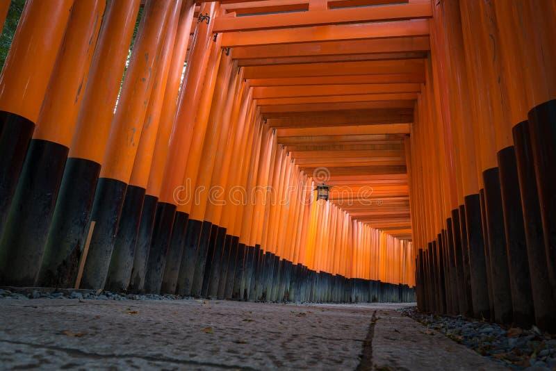 O torii do vermelho bloqueia o trajeto da passagem no santuário do taisha do inari do fushimi fotos de stock royalty free
