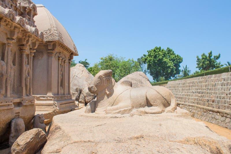 O touro atrás de Arjuna Ratha, monumento de cinco rathas, Mahabalipuram, Tamil Nadu, Índia imagens de stock