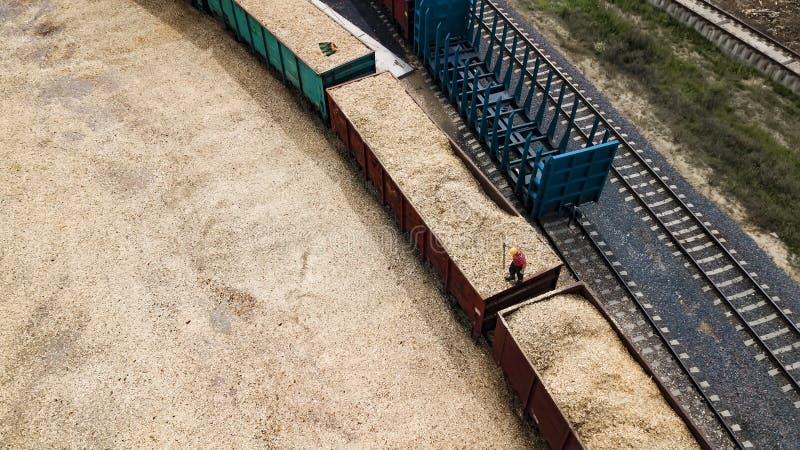 O trabalhador carrega a serragem no carro em uma fábrica de woodworking imagens de stock royalty free