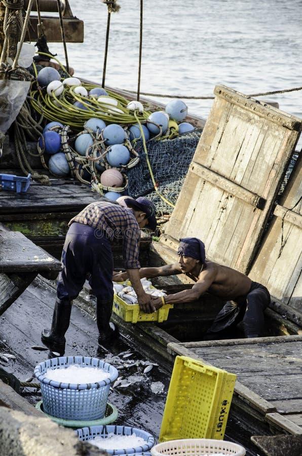 O trabalhador não identificado leva a cesta dos peixes no barco de pesca imagem de stock royalty free