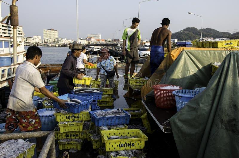 O trabalhador não identificado leva a cesta dos peixes para transportar imagens de stock