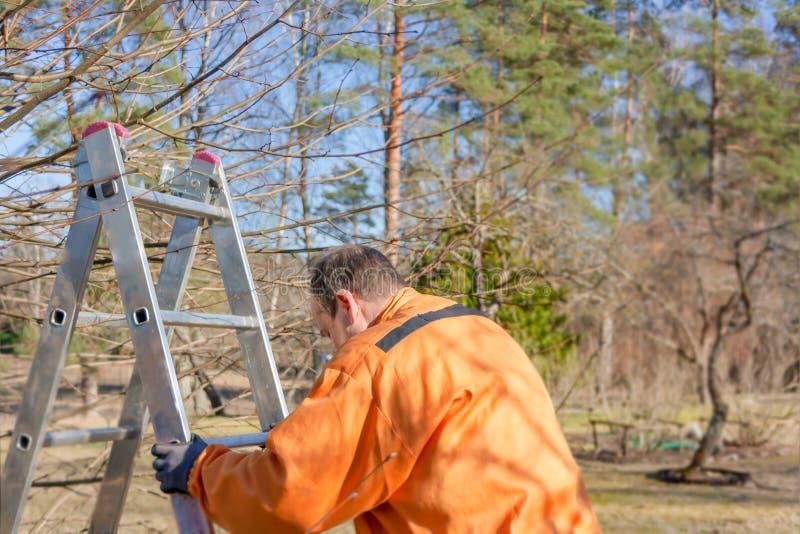 O trabalhador no traje alaranjado faz a escada na madeira Esta??o de mola imagem de stock