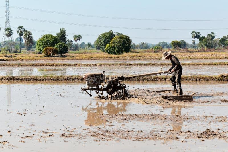 O trabalhador que ara no campo do arroz prepara o arroz da planta foto de stock royalty free
