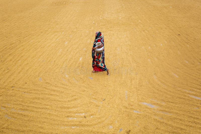 O trabalhador tradicional do moinho de arroz vira a almofada para secar fotografia de stock royalty free