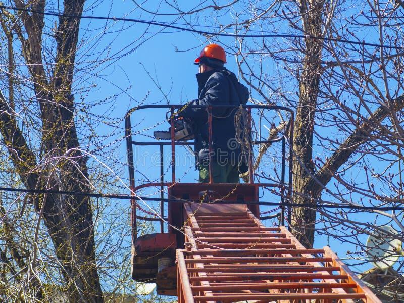 O trabalhador vê os ramos de uma árvore nas escadas fotos de stock royalty free