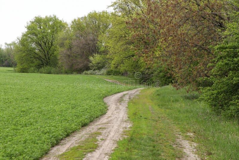O trajeto ao longo do campo que conduz à floresta, foto horizontal imagens de stock
