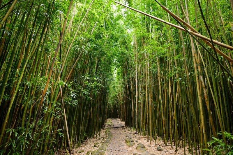 O trajeto através da floresta de bambu densa, conduzindo a Waimoku famoso cai Fuga popular de Pipiwai no parque nacional de Halea fotos de stock