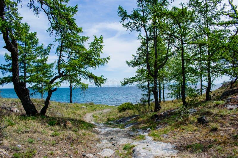 O trajeto conduz à água O trajeto ao lago trajeto nas bordas da árvore de Natal foto de stock