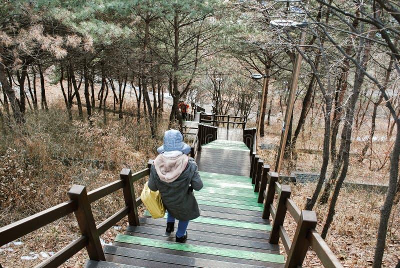 O trajeto da caminhada e a natureza bonita de Coreia no monte cobrem durante a estação do inverno para o conceito do curso imagem de stock