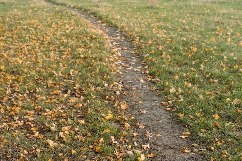 O trajeto da folha do outono desvaneceu as folhas amarelas caídas imagens de stock