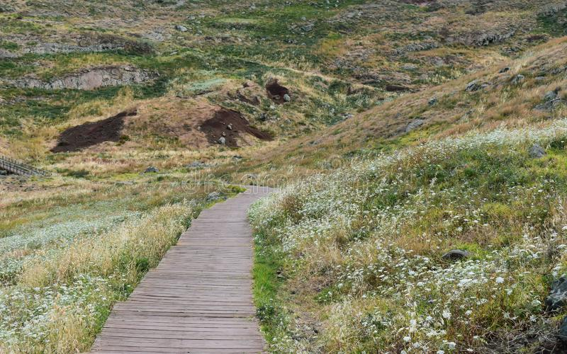 O trajeto de caminhada arborizado cruza o prado Tomado em St Lawrence Peninsula imagens de stock