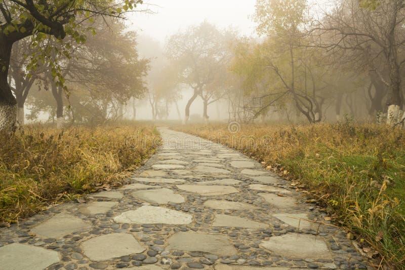 O trajeto de floresta do outono fotos de stock royalty free