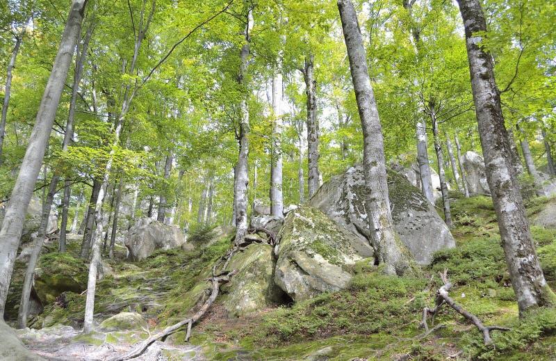 Download Floresta em montanhas imagem de stock. Imagem de floresta - 29839445