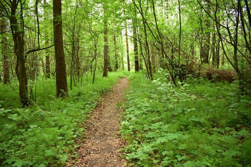 O trajeto na floresta, a floresta é um ponto de férias favorito para milhões de povos, ele é aqui que você pode encontrar a paz d fotos de stock