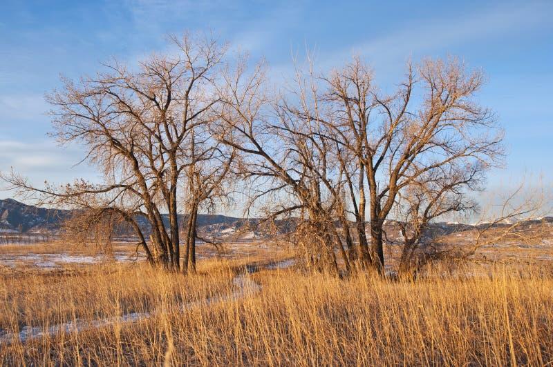 O trajeto nevado conduz entre 2 árvores na distância fotografia de stock