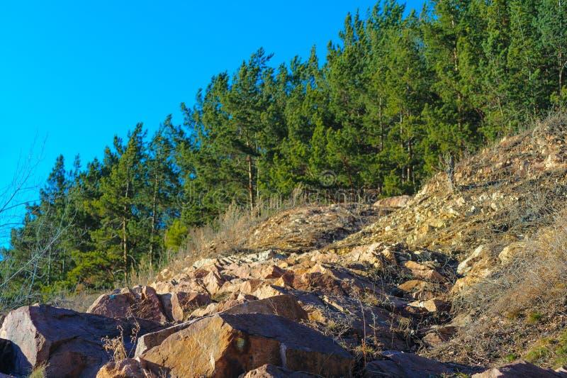 O trajeto rochoso aumenta à floresta conífera fotos de stock