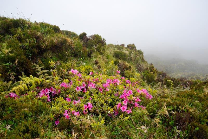 O trajeto trekking de Açores Monte Escuro com as flores na montanha balança fotos de stock royalty free