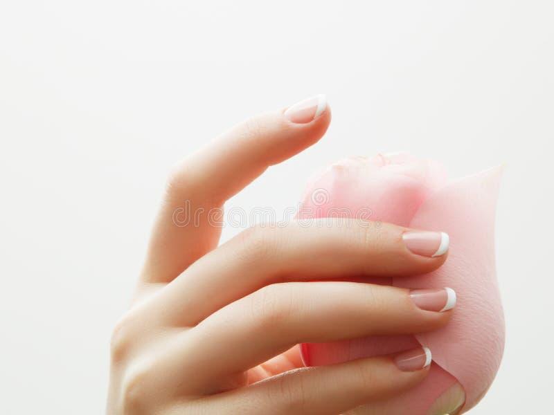 O tratamento de mãos, mãos bonitas da mulher dos termas das mãos, pele macia, pregos bonitos com rosa do rosa floresce as pétalas fotografia de stock