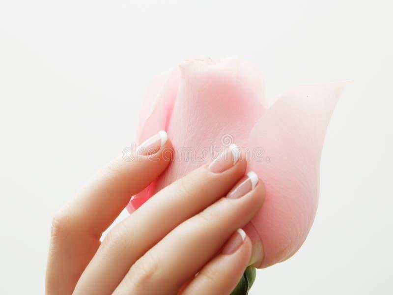 O tratamento de mãos, mãos bonitas da mulher dos termas das mãos, pele macia, pregos bonitos com rosa do rosa floresce as pétalas fotos de stock royalty free