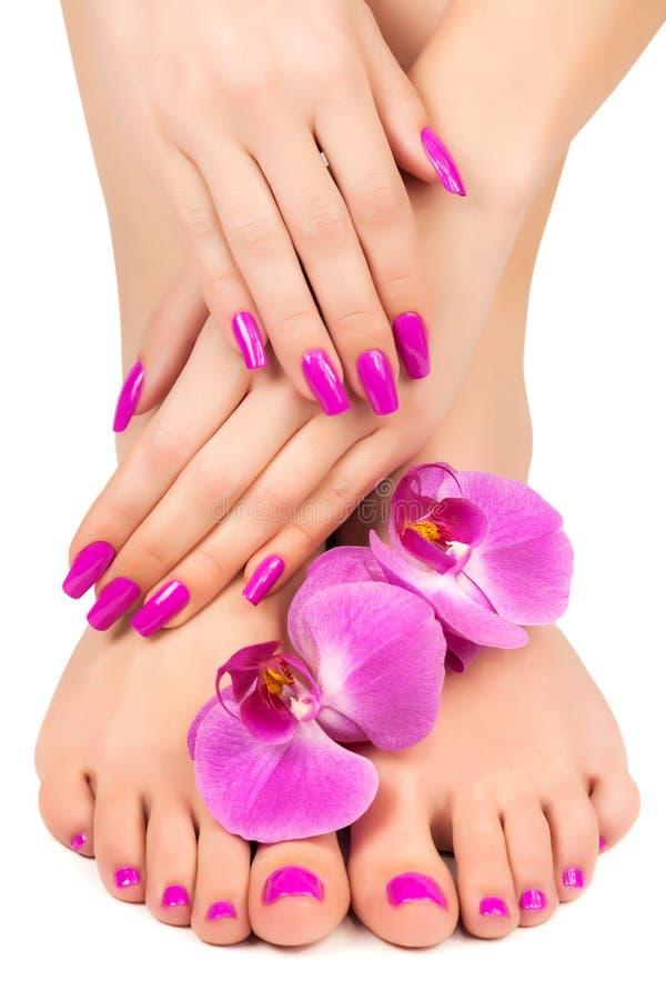 O tratamento de mãos e o pedicure cor-de-rosa com uma orquídea florescem foto de stock royalty free