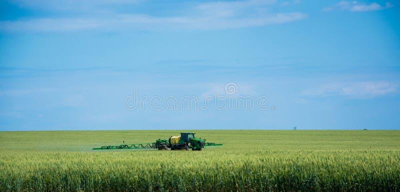 O trator fertiliza o trigo ou o centeio foto de stock