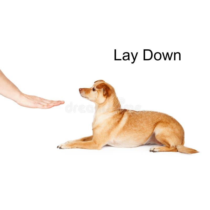 O treinamento do cão estabelece fotos de stock