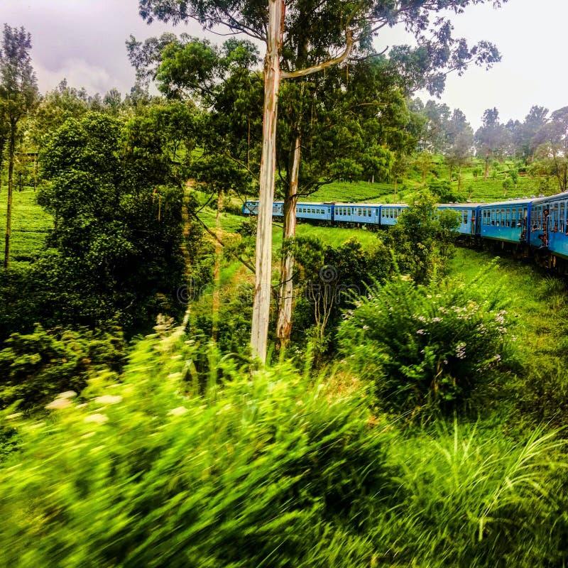 O trem do chá de Sri Lanka fotografia de stock