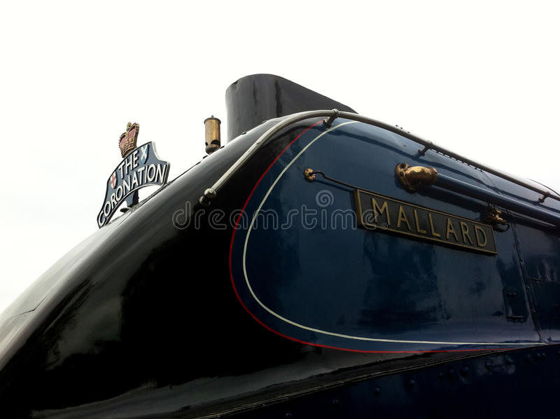 O trem do pato selvagem imagens de stock royalty free