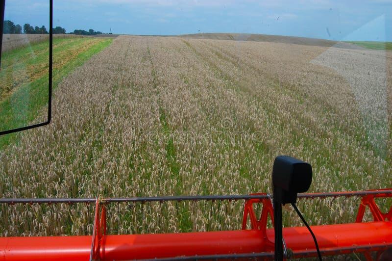 O trigo é visível da cabine da ceifeira de liga fotografia de stock