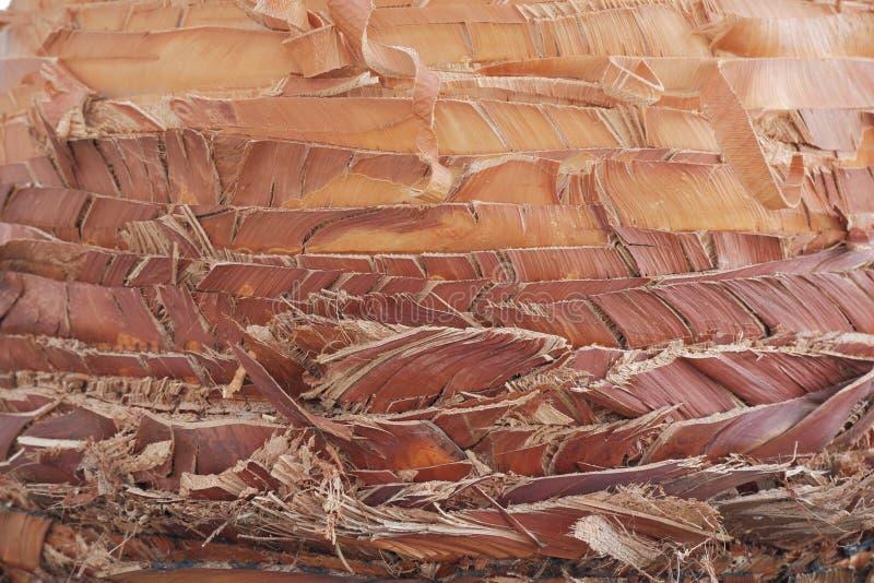 o tronco da palmeira, madeira marrom alaranjada da textura e amarela brilhante e os cortes colhidos de madeira, palmeiras das fol foto de stock royalty free