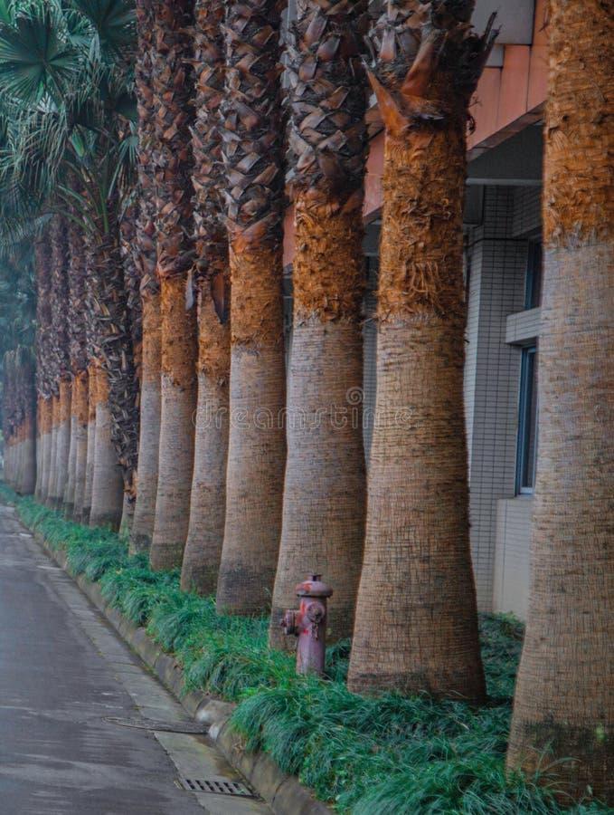O tronco de árvore ao lado da rua Há uma fileira de palmeiras modernas aqui Um tronco marrom Uma planta verde ao lado da rua Mim foto de stock royalty free