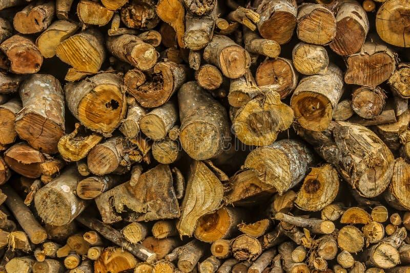 O tronco de árvore na selva imagens de stock