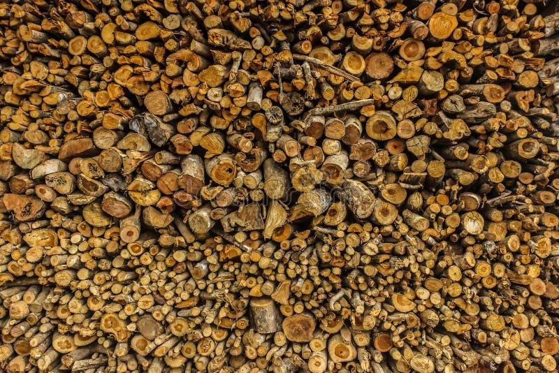 O tronco de árvore na selva fotos de stock