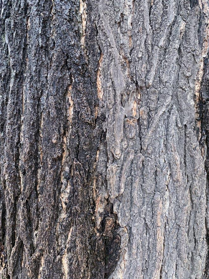 O tronco de árvore velho no fundo do parque foto de stock