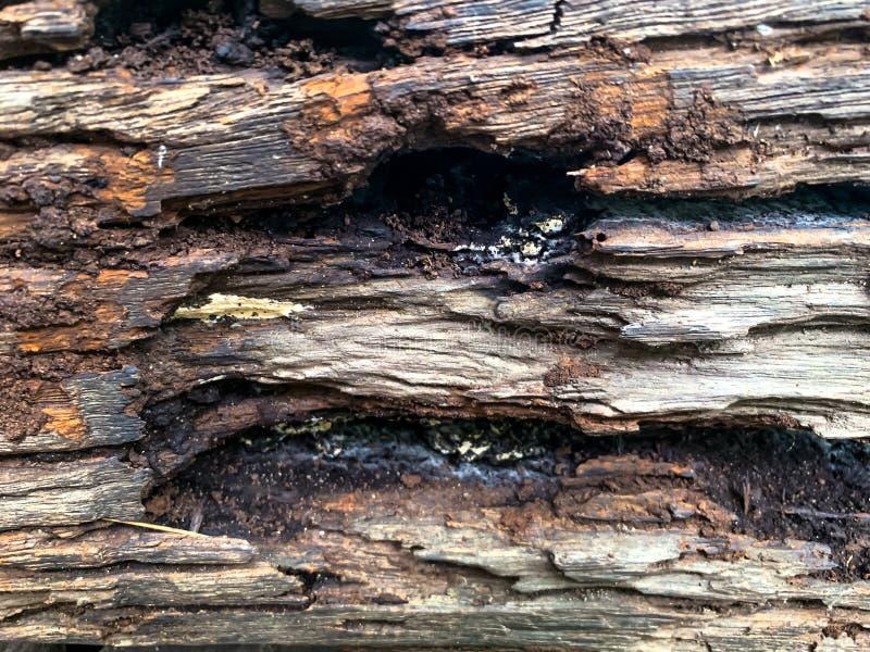 O tronco de árvore velho para o fundo foto de stock royalty free
