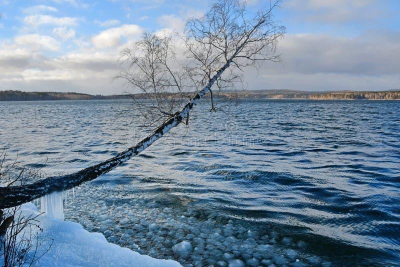O tronco do vidoeiro é inclinado fortemente sobre o lago Uvildy na região de Chelyabinsk Rússia fotos de stock