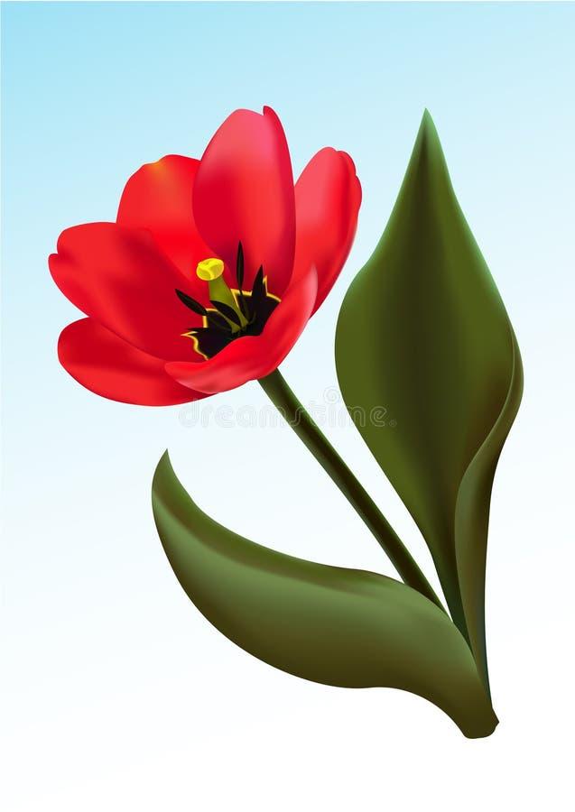 O tulip vermelho ilustração do vetor