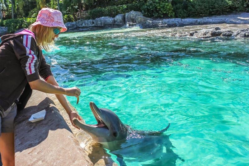 O turista alimenta o golfinho imagens de stock