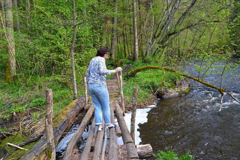 O turista fêmea atravessa com cuidado na ponte de madeira o vermelho do rio Região de Kaliningrad fotografia de stock