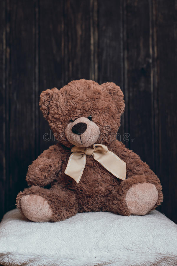 O urso do luxuoso está sentando-se no descanso imagens de stock