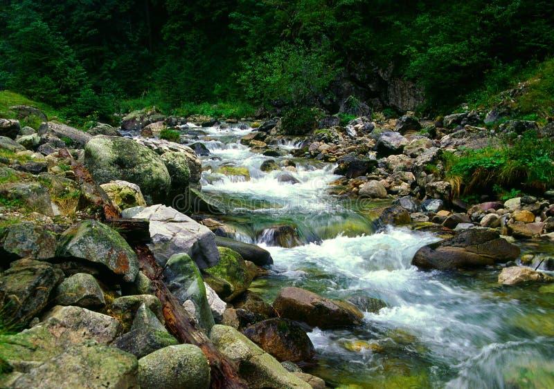 O vale de Chocholowska. foto de stock royalty free