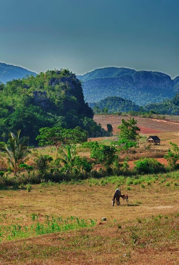 O vale de Vinales, Cuba foto de stock